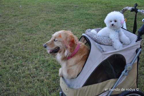 perros carrito taiwan