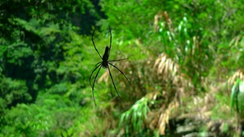 taroko gorge taiwan hualien spider