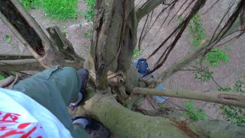tree, climb, subir, árbol, tainan, taiwan