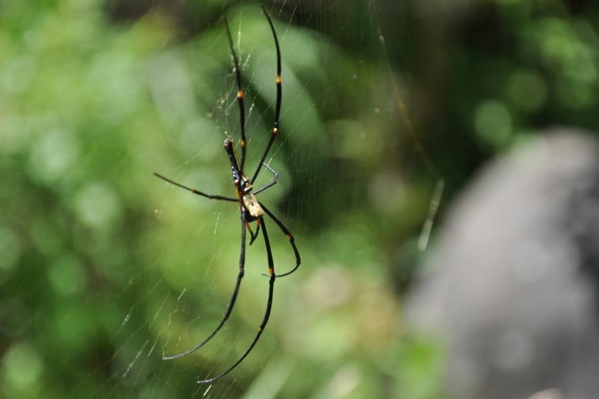 spider, araña, railroad, ferrocarril, fuyuan recreation area, fuyuan, wanrong, hualien, taiwan