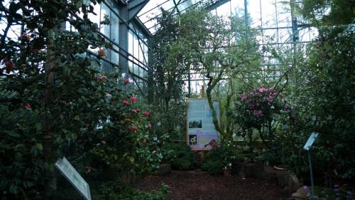 koln, colonia, zoo, park, garden, parque, invernadero, orquideas