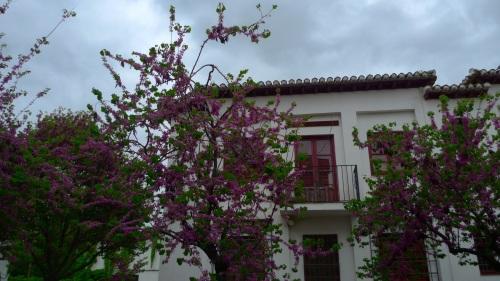 Albaicín, Granada